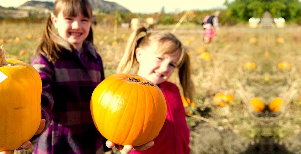 home-pumpkin